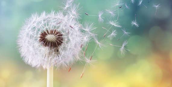 Pollen – Nettoyage des vitres